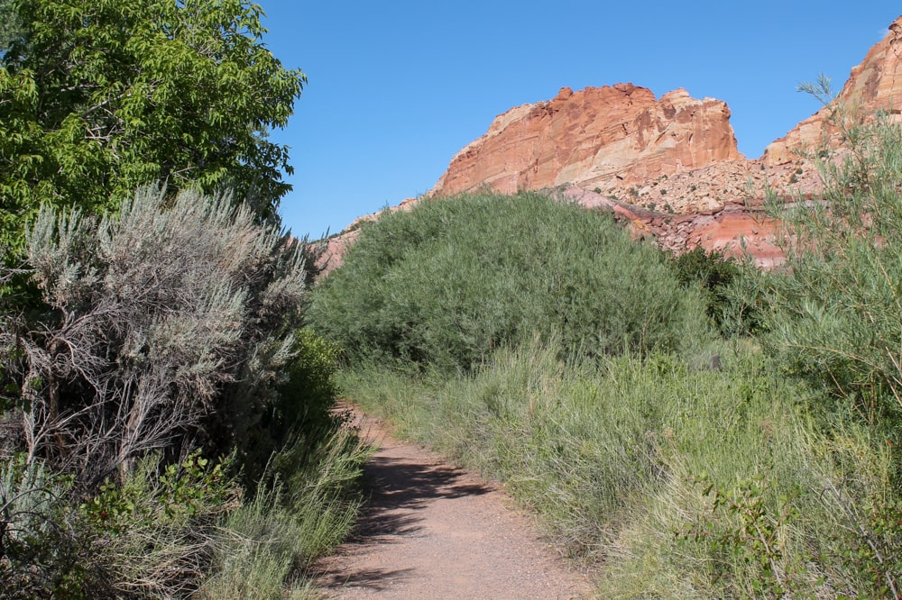 Fremont River Trail in Capitol Reef National Park