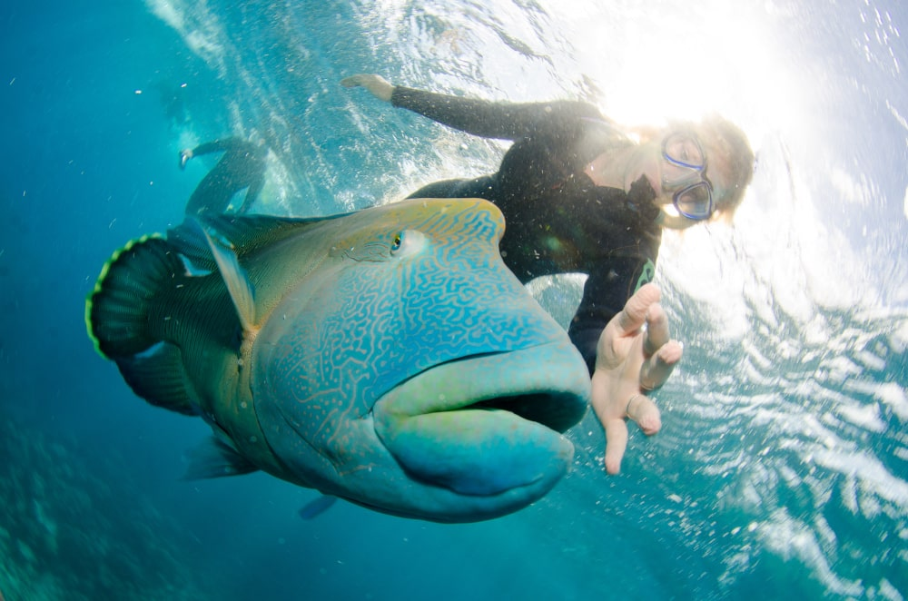 Snorkeling at the Great Barrier Reef - Cairns