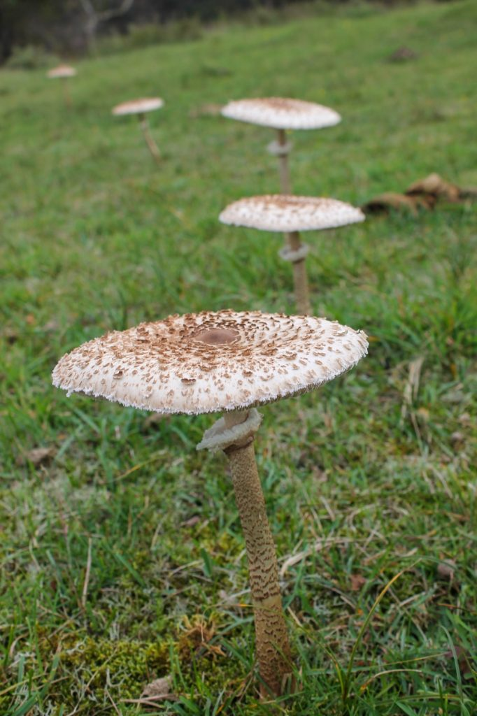 Paddenstoelen in Zuid-Kennemerland
