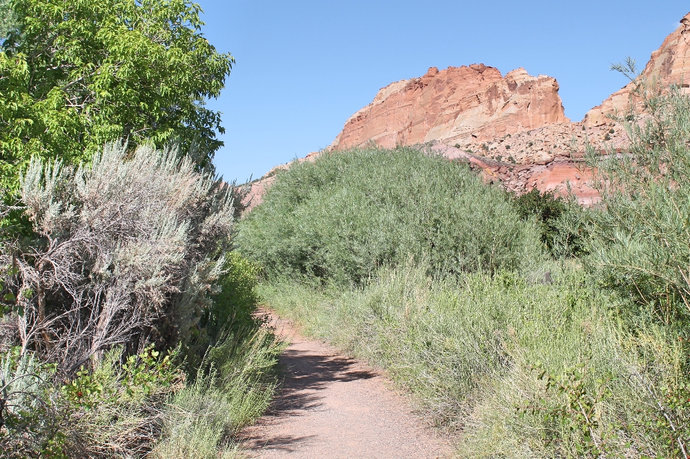 Capitol Reef - fremont river trail 1