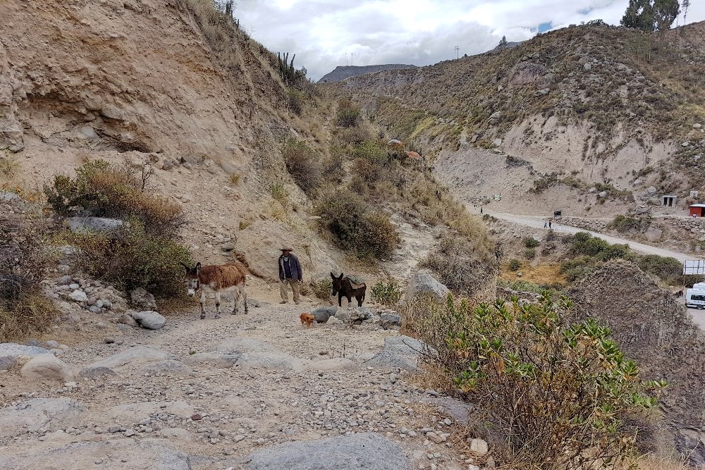 arequipa - ezels Colca Canyon