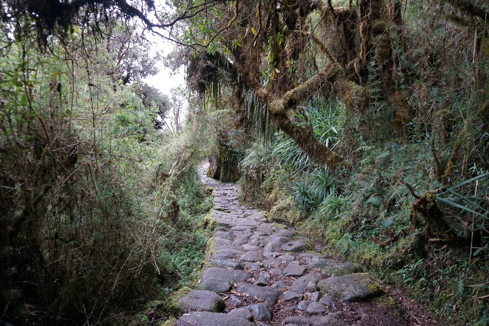 Inca Trail - bamboewoud