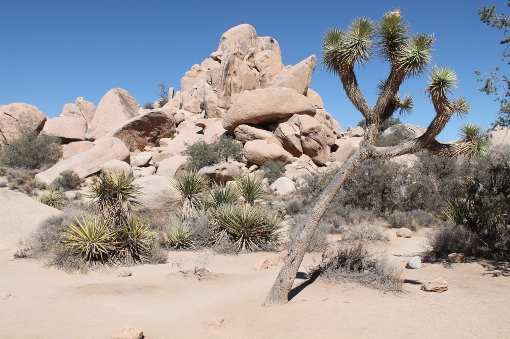 Wandelen in Joshua Tree National Park - Hidden Valley Trail - scenic
