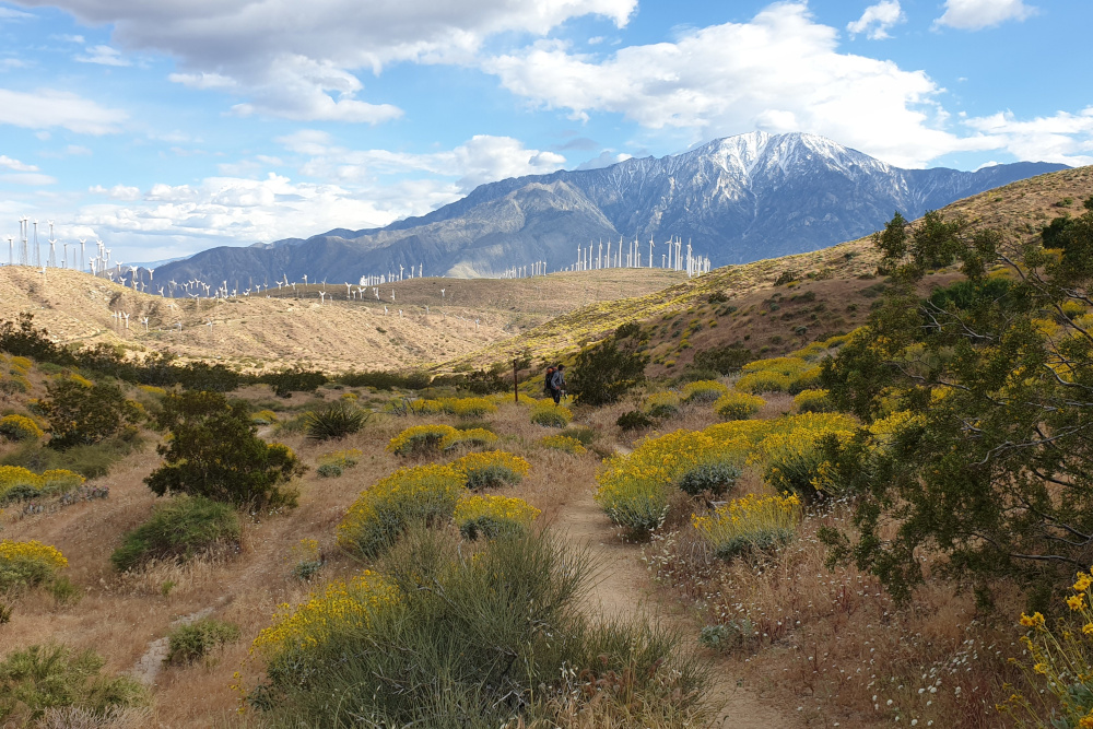Van Idyllwild naar Big Bear Lake - Pacific Crest Trail week 3 - windmolenpark