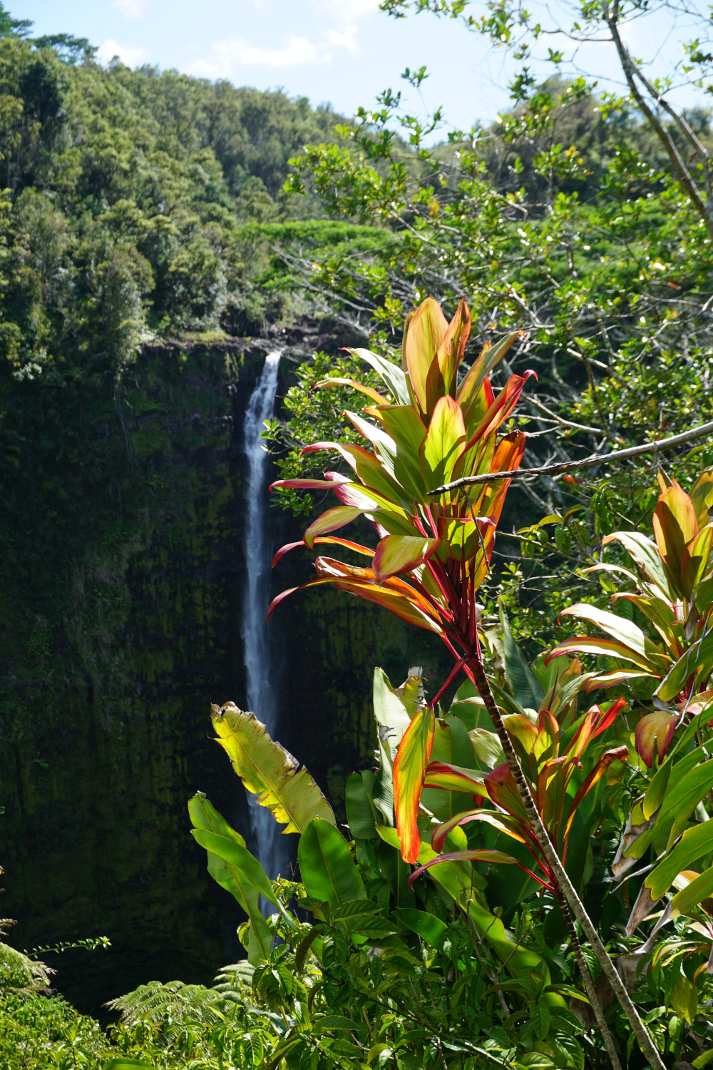 Hawaii - The Big Island - Akaka Falls
