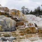 Yellowstone - Mammoth Hot Springs en veel wildlife