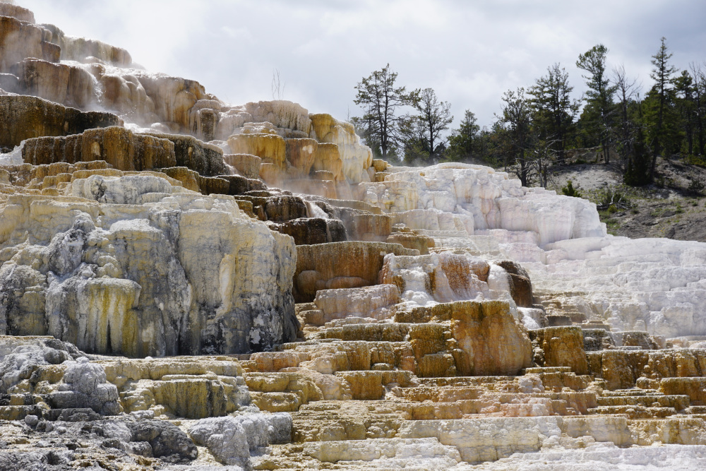 Yellowstone-Mammoth Hot Springs and lots of wildlife