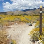 Video Pacific Crest Trail