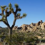 Reistips Joshua Tree National Park