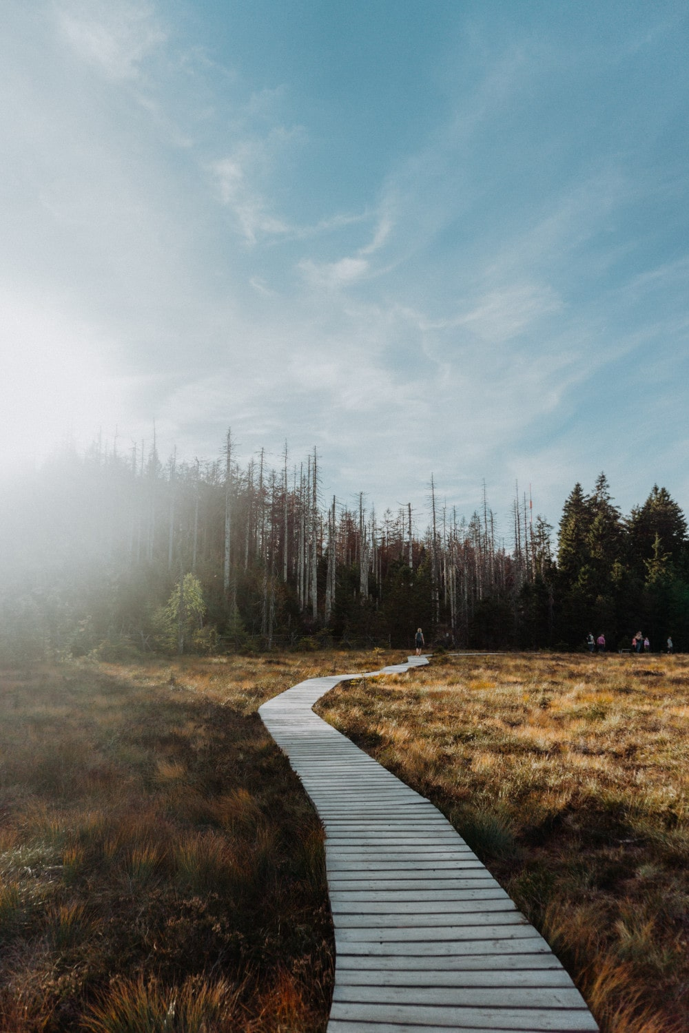 National Park Harz - Photo Marina Reich via Unsplash