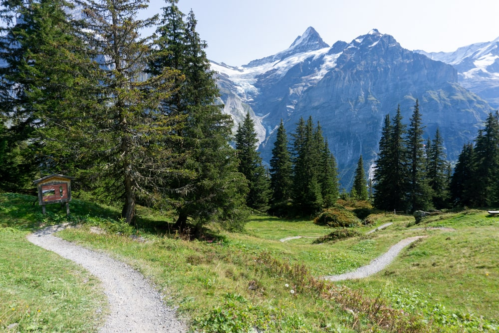 Walking through the forest to Grindelwald