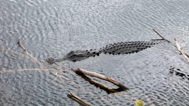 De Everglades in Florida - een nationaal park vol alligators