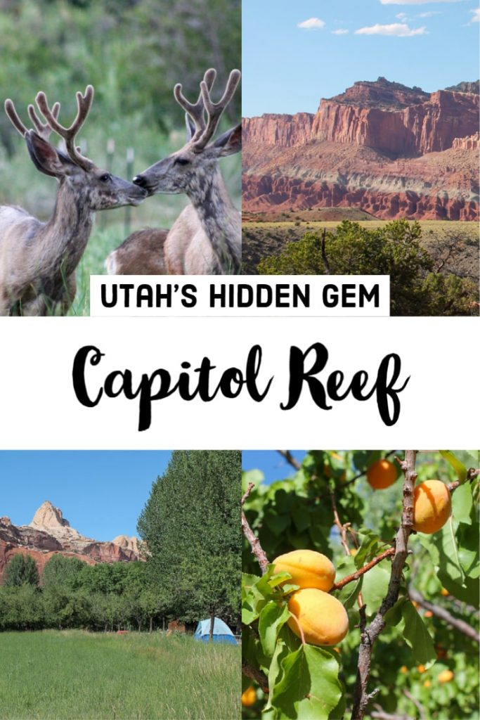 Visiting Capitol Reef National Park - Utah - Tips and the best things to do