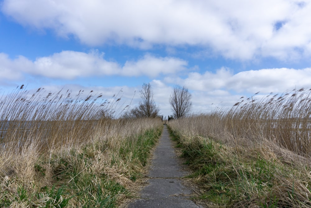 On the west side of Lauwersmeer National Park